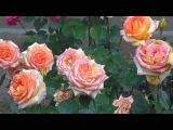 Андрей Обидин - Рапсодия любви (Розы и Дождь)