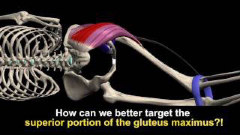 Gluteus maximus, 'locked-short' muscle, Length-Tension Relationship and more.