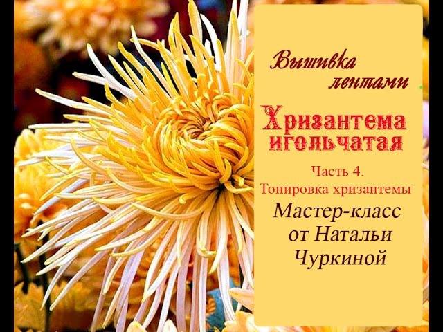 Мастер класс Хризантема игольчатая от Натальи Чуркиной Часть 4 Тонировка хризантемы