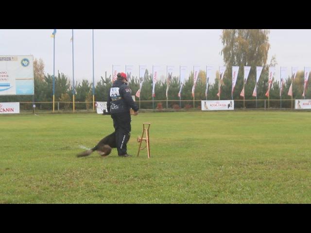 Cup of Ukraine 2017 IPO 3,B 80, S.Klimentovskaja,Antey Hitzig Hund