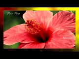 Ретро 60 е - Анри Сальвадор - Petite Fleur  Маленький цветок (клип)