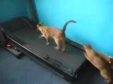 cat's fitness