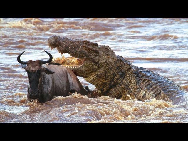Удивительные моменты из жизни диких животных