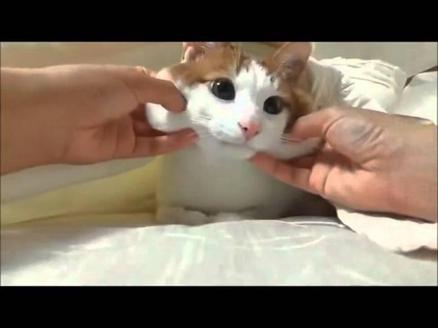 Котейку мацают за щёчки