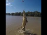 Как высоко могут прыгать крокодилы.