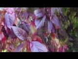 Осень.  Прощание с летом... Это было 24 сентября, а 25 ночью ударил мороз и вся красота поникла...