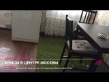Крысы атакуют москвичей: как «Моя улица» связана с нашествием грызунов