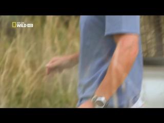 Кевин Ричардсон - Заклинатель львов _ HD 1080pi