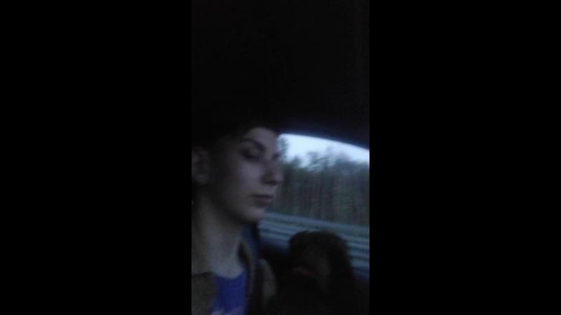 Буся Авто_собака. Вот так мы ездим на коленях, почти за рулем) Буся очень любит смотреть в окно.