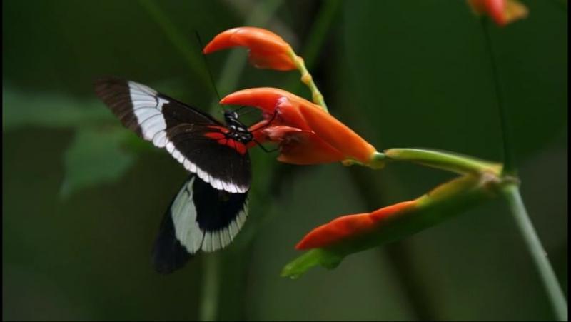 BBC Как устроена природа - BBC How Nature Works (2012) 2. Jungle