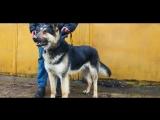 Продолжение истории собак из бобруйского БУКСАПА
