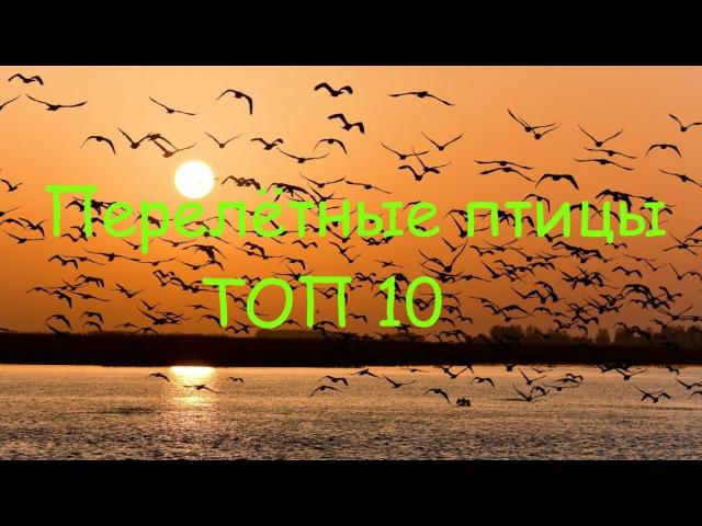 Перелетные птицы ТОП 10