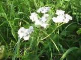 Живой звук природы #3.  Ветер  Цветы  Трава