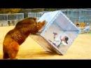 Trêu ngươi động vật qua kính khi động vật bị troll - animals attack people through glass