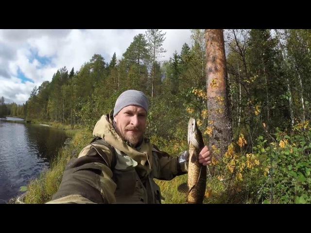 Рыбалка в Северной Карелии Последние моменты, крупная щука, тайга ,хозяин тайги.