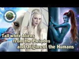 Tall white aliens from the Pleiades and Origins of the Humans