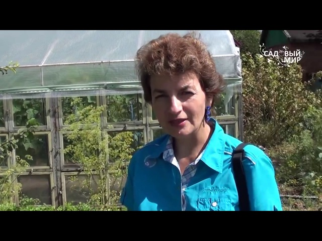Ароматические растения Мелиса и Котовник. Сайт Садовый мир