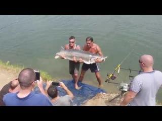 Супер Рыбалка Бешеный Улов Огромная Рыба Остр 65 кг 1.5 м