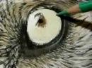 Рисование волка / Painting a Day Demonstration - Wolf Eye by Roberta Roby Baer PSA