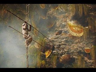 Охотники на дикий горный мед Гурунские племена. The Gurung Honey Hunters