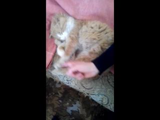 кіт заснув