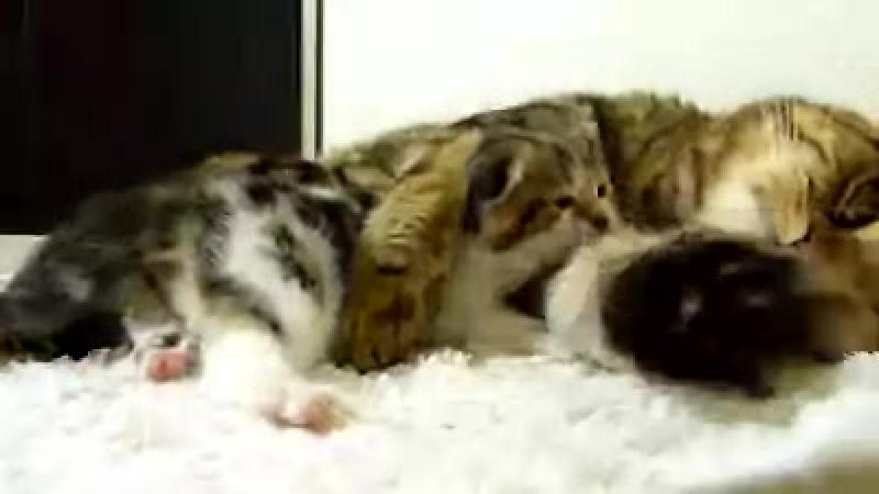 Мамочка 😊😊😊😍😍😍‼ Сладких снов всем! zoohome.by мамыонитакие семья всегдавместе даритьтепло забота кошки котики