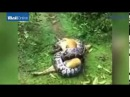 INTENSE MOMENT INTENSE moment owner saves dog from python's clutches