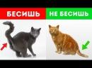 7 ПРИЗНАКОВ ЧТО ТЫ БЕСИШЬ СВОЕГО КОТА Белый кот