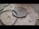 Жители дома по ул. Короленко в Бийске рискуют остаться без люков Будни, 05.10.17г., Бийское ...