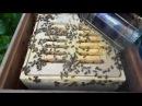 УЛЕЙ ВЕЛИКОРУСЬКИЙ Часть 7 Изоляция матки на зиму Beekeepers Honeybees Beehives ミツバチ