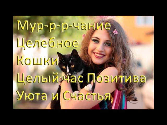 Мурлыканье Кошки Мурчание Лечащей Кошки Релакс Позитив Целый час счастья и расслабления