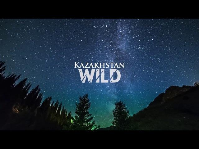 Timelapse - Kazakhstan Wild   Таймлапс - Дикий Казахстан