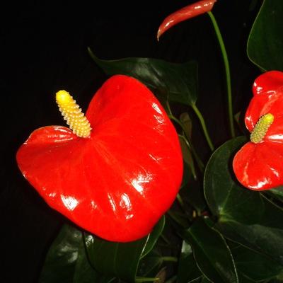 Олечка Цветочкина