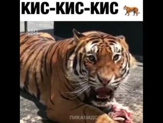 Какой злой котик