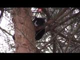 Операция по спасению кота, который два дня провел на дереве