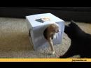 кошкин дом за 2 минуты