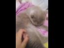 моя первая трансляция играю с кошкой