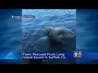 Собака спасла тонувшего оленёнка