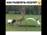 temp_regrann_1490204143686.mp4