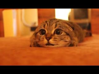 Кот обожает смотреть фильмы