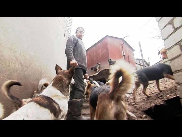 ВВоронеже разгорается конфликт между владельцем единственного вгороде приюта для собак исоседями