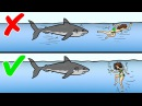 13 Советов Как Пережить Нападение Диких Животных