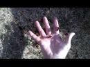 Le frelon asiatique grand prédateur mais moins agressif qu'on veut le faire croire
