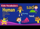 Kids vocabulary Theme Human - Action verbs, Body, Feel - Words Theme collection - Learn English