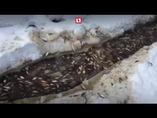 Рыбалка с помощью снегохода