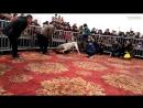 Булли Кутта vs Тоса Ину