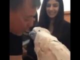 Говорящий попугай (6 sec)