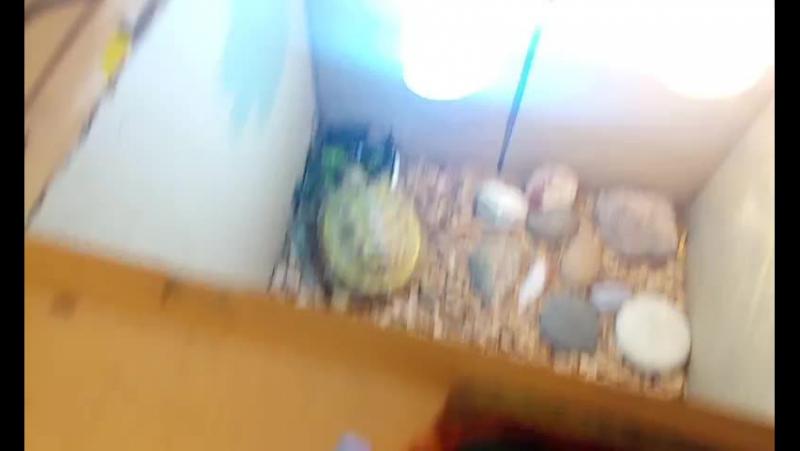Продолжаем ужин черепахи Миранды