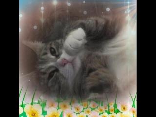 Моя кошка Рыся