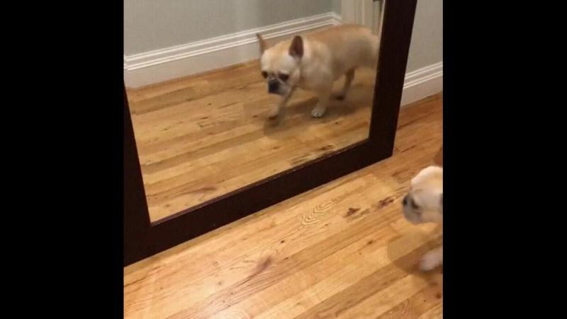 Как я реагирую на моё отражение по утрам.